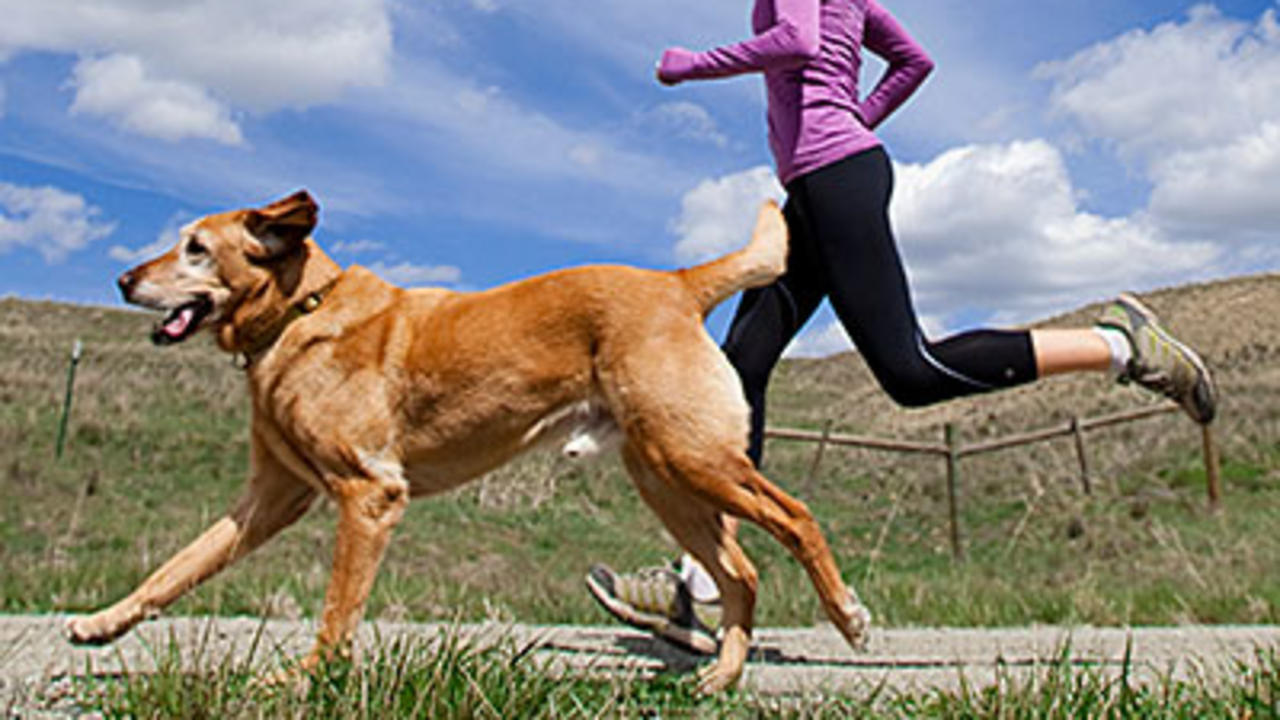 Exercise with Dog